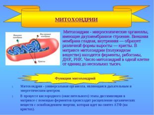 Митохондрии - микроскопические органеллы, имеющие двухмембранное строение. В