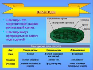 Пластиды - это энергетические станции растительной клетки. Пластиды могут пре