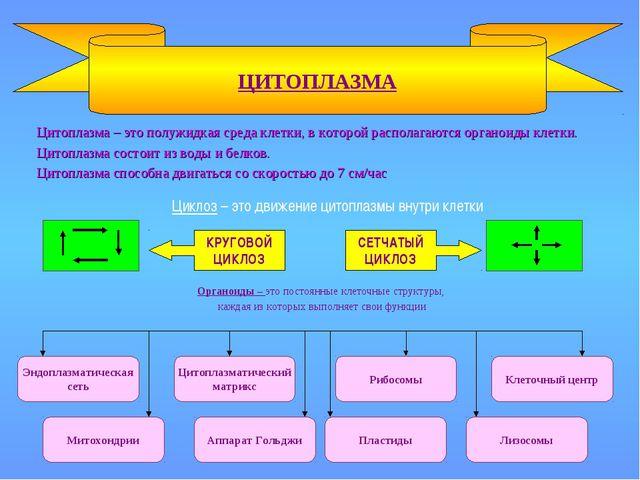 Цитоплазма – это полужидкая среда клетки, в которой располагаются органоиды...