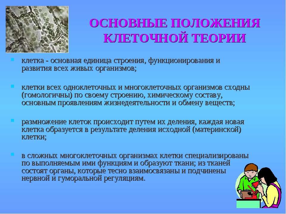 ОСНОВНЫЕ ПОЛОЖЕНИЯ КЛЕТОЧНОЙ ТЕОРИИ клетка - основная единица строения, функц...