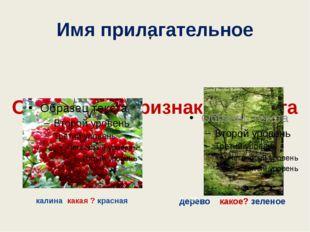 Имя прилагательное Обозначает признак предмета калина какая ? красная дерево