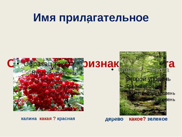 Имя прилагательное Обозначает признак предмета калина какая ? красная дерево...
