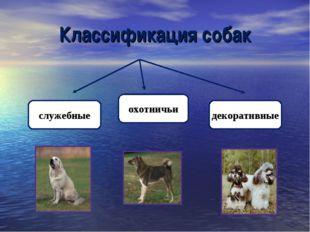 Классификация собак служебные охотничьи декоративные