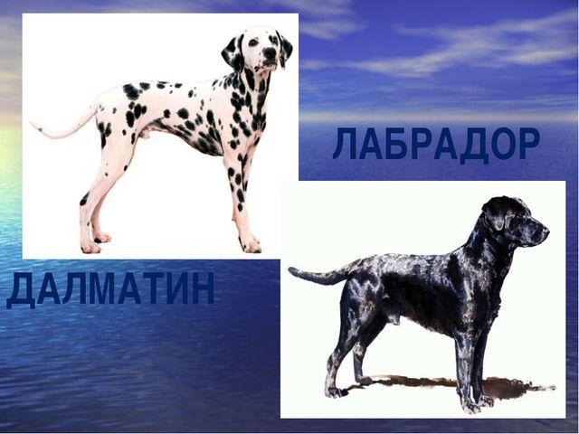 ДАЛМАТИН ЛАБРАДОР