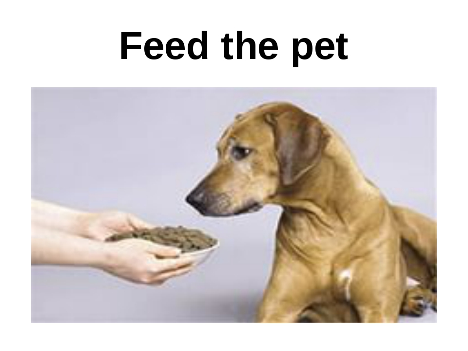 Feed the pet