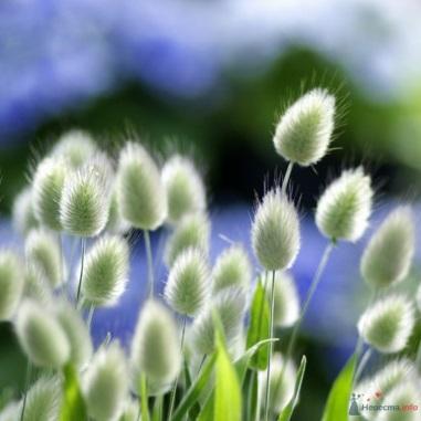 http://flowerekt.ru/wp-content/uploads/2012/04/211532l.jpg