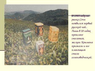 В 1905 году на рынке Сочи появился первый русский чай.. Лишь в 20 годах прошл