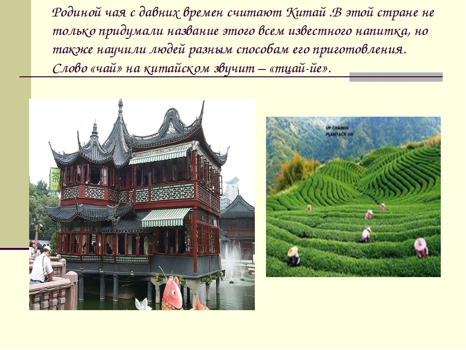 Родиной чая с давних времен считают Китай .В этой стране не только придумали...