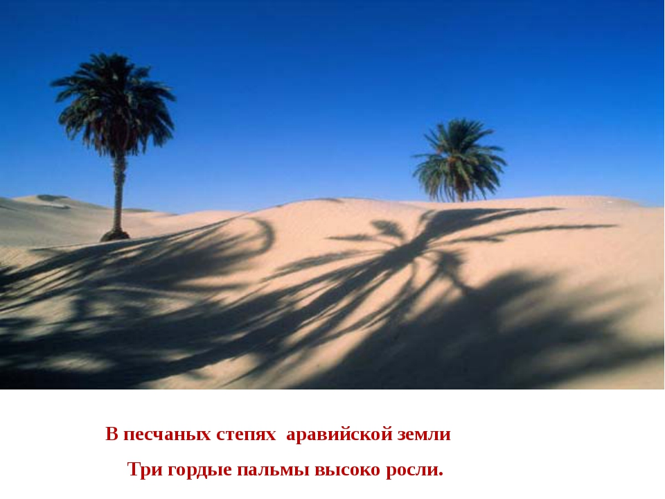 В песчаных степях аравийской земли Три гордые пальмы высоко росли.