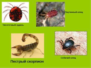 Чесоточный зудень Паутинный клещ Собачий клещ Пестрый скорпион