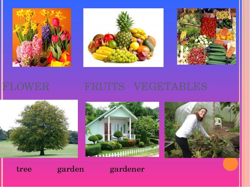 FLOWER FRUITS VEGETABLES tree garden gardener