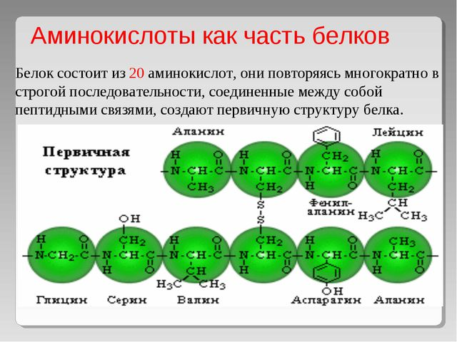 Аминокислоты как часть белков   Белок состоит из 20 аминокислот, они повтор...