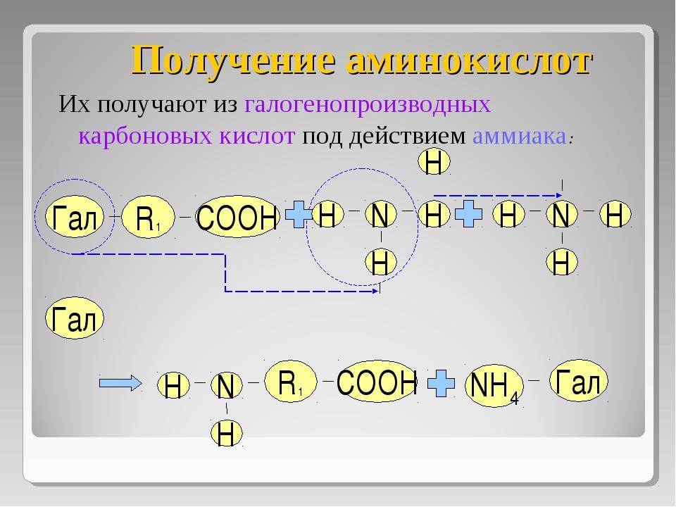 Получение аминокислот Их получают из галогенопроизводных карбоновых кислот по...