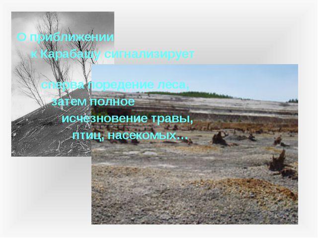 О приближении к Карабашу сигнализирует сперва поредение леса, затем полное и...