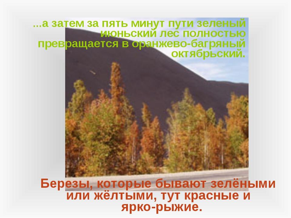 …а затем за пять минут пути зеленый июньский лес полностью превращается в ор...