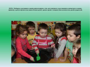 ЦЕЛЬ:Обобщить и расширить знания дошкольников о том, как ухаживать за растен
