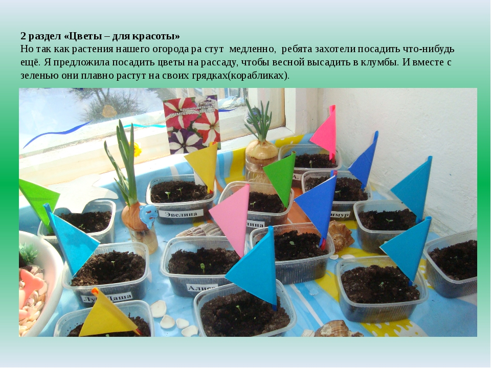 2 раздел «Цветы – для красоты» Но так как растения нашего огорода ра стут мед...