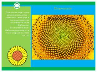 Подсолнухи Подсолнухи имеют сразу две формы симметрии – радиальная симметрия,