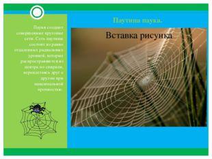 Паутина паука. Пауки создают совершенные круговые сети. Сеть паутины состоит