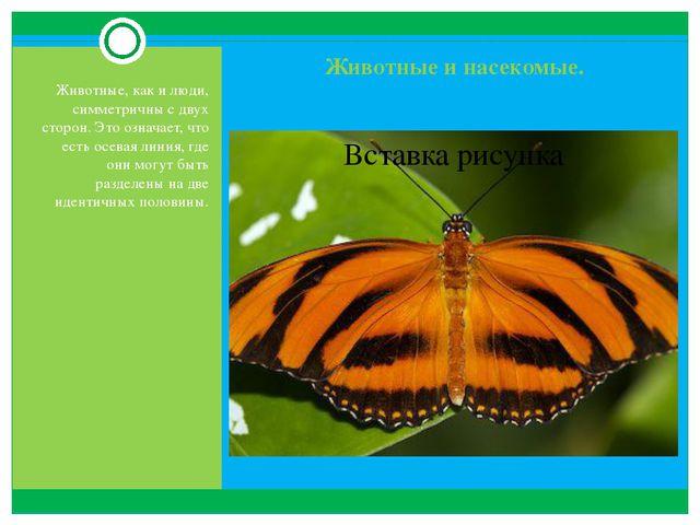 Животные и насекомые. Животные, как и люди, симметричны с двух сторон. Это оз...