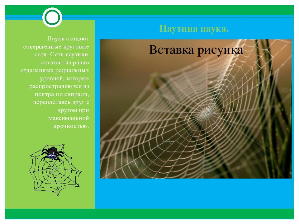 Паутина паука. Пауки создают совершенные круговые сети. Сеть паутины состоит...