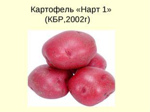 Картофель «Нарт 1» (КБР,2002г)