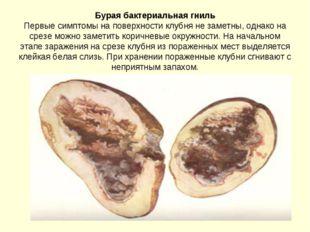 Бурая бактериальная гниль Первые симптомы на поверхности клубня не заметны, о