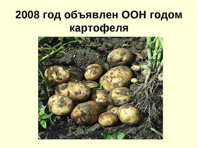 2008 год объявлен ООН годом картофеля