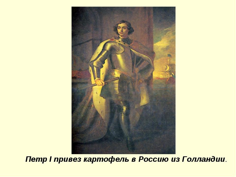 Петр I привез картофель в Россию из Голландии.