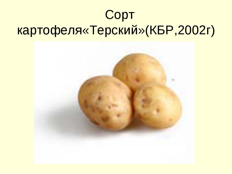 Сорт картофеля«Терский»(КБР,2002г)