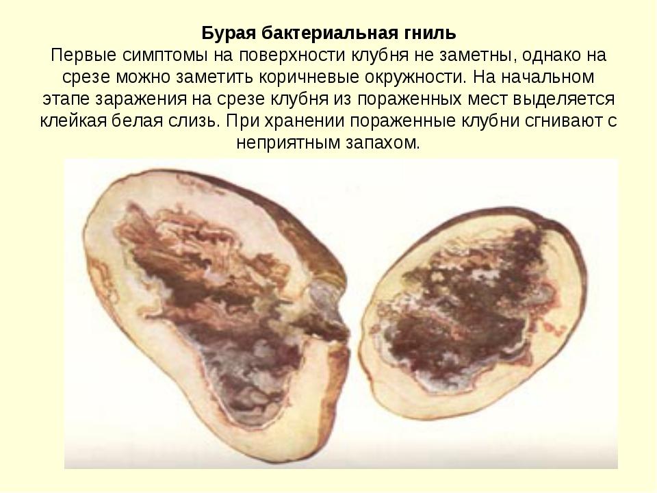 Бурая бактериальная гниль Первые симптомы на поверхности клубня не заметны, о...