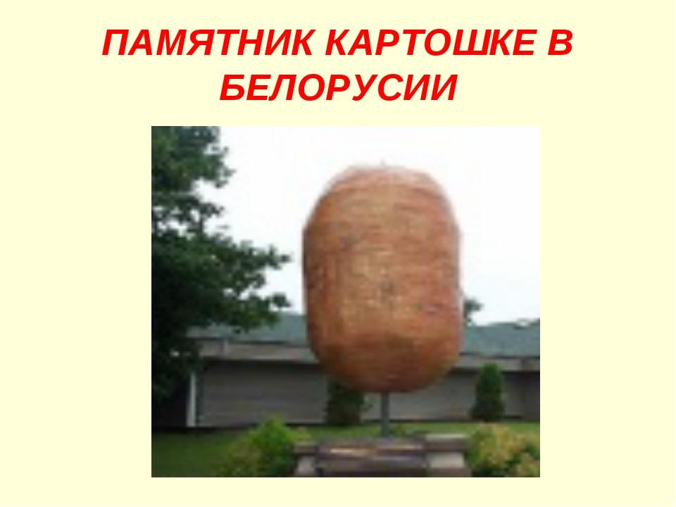 ПАМЯТНИК КАРТОШКЕ В БЕЛОРУСИИ