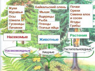 Почки Орехи Семена елок и сосен Ягоды Грибы Животные Хищные Растительноядные