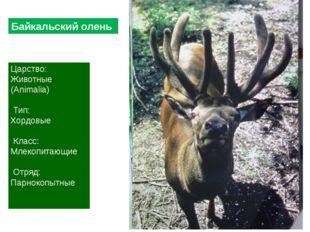 Царство: Животные (Animalia) Тип: Хордовые Класс: Млекопитающие Отряд: Парнок
