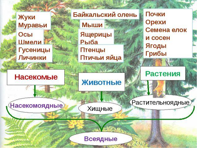 Почки Орехи Семена елок и сосен Ягоды Грибы Животные Хищные Растительноядные...
