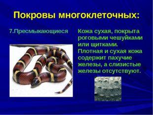 Покровы многоклеточных: 7.Пресмыкающиеся Кожа сухая, покрыта роговыми чешуйк