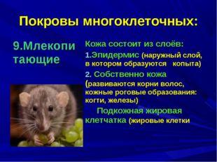 Покровы многоклеточных: 9.Млекопитающие Кожа состоит из слоёв: Эпидермис (на
