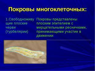 Покровы многоклеточных: 1.Свободноживущие плоские черви (турбелярии) Покровы