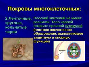 Покровы многоклеточных: 2.Ленточные, круглые, кольчатые черви Плоский эпител