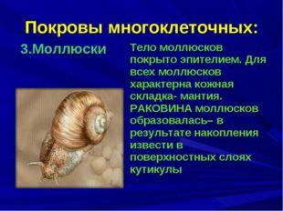 Покровы многоклеточных: 3.Моллюски Тело моллюсков покрыто эпителием. Для все