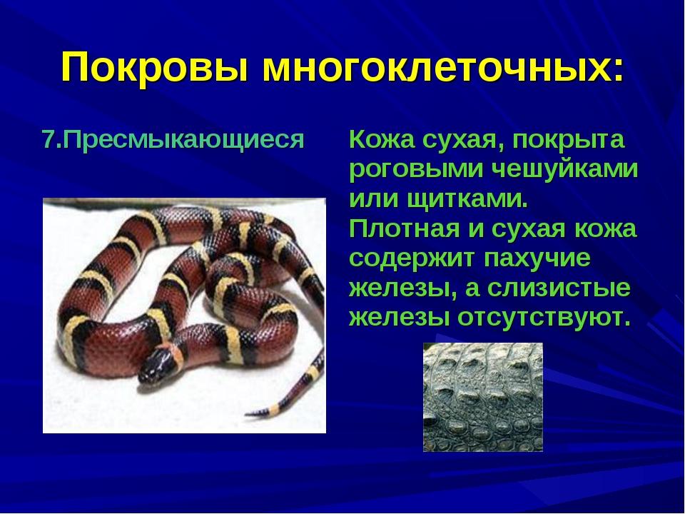 Покровы многоклеточных: 7.Пресмыкающиеся Кожа сухая, покрыта роговыми чешуйк...