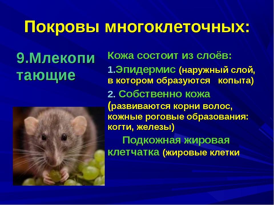 Покровы многоклеточных: 9.Млекопитающие Кожа состоит из слоёв: Эпидермис (на...