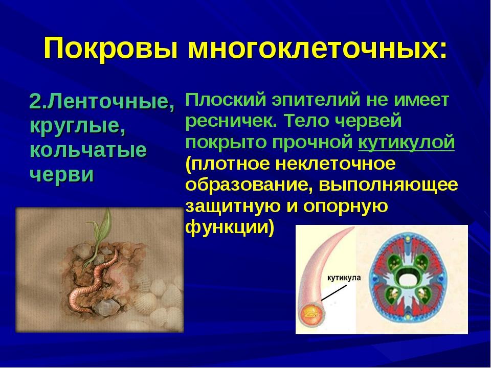 Покровы многоклеточных: 2.Ленточные, круглые, кольчатые черви Плоский эпител...