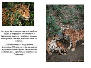 Это ягуар. Он тоже представитель семейства кошачьих и прекрасно себя чувствуе