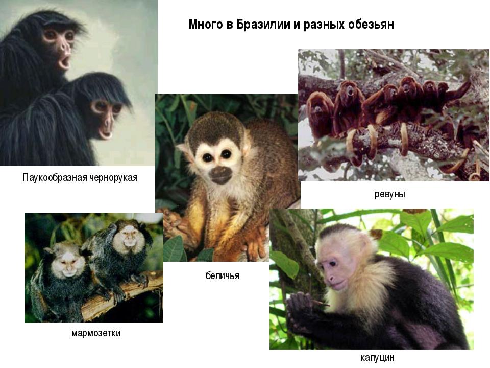 Много в Бразилии и разных обезьян
