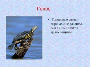 Голос Голосовые связки черепахи не развиты, она лишь шипит в целях защиты.