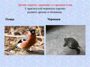 Зрение черепах сравнимо со зрением птиц У красноухой черепахи хорошо развито