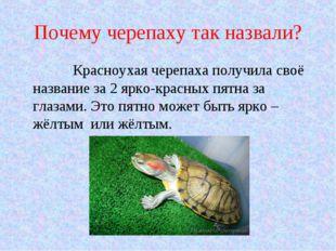 Почему черепаху так назвали? Красноухая черепаха получила своё название за 2