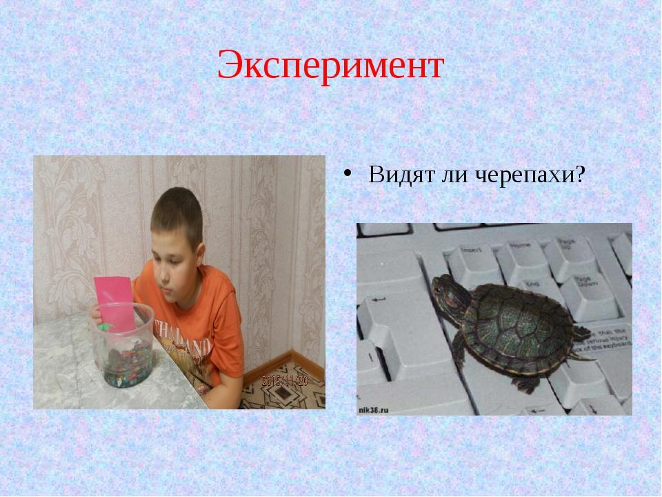 Эксперимент Видят ли черепахи?