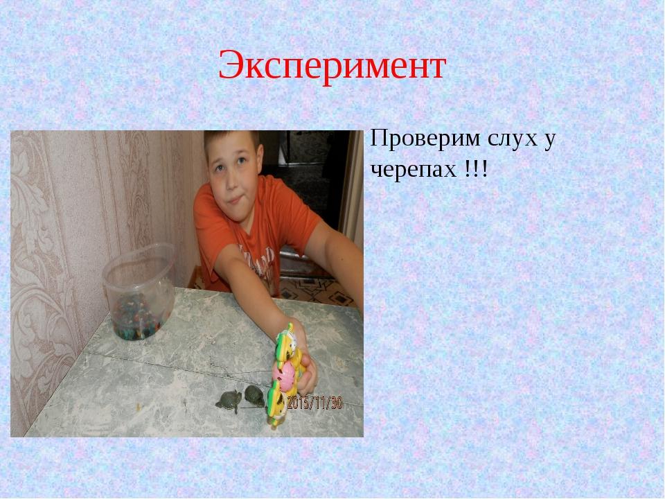 Эксперимент Проверим слух у черепах !!!